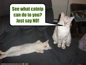 See what catnip can do to you? Just say NO!