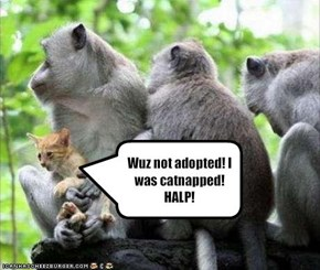 Wuz not adopted! I was catnapped! HALP!