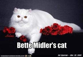 Bette Midler's cat