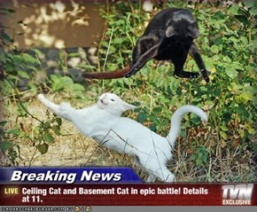 Breaking News - Ceiling Cat and Basement Cat in epic battle! Details at 11.