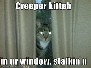 Creeper kitteh   in ur window, stalkin u