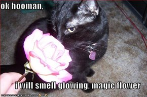 ok hooman,   i will smell glowing, magic flower