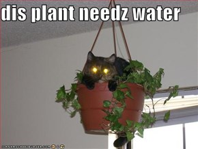 dis plant needz water