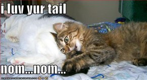 i luv yur tail  nom...nom...
