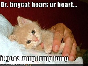 Dr. tinycat hears ur heart...  it goez tump tump tump
