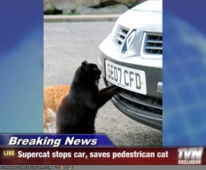 Breaking News - Supercat stops car, saves pedestrican cat
