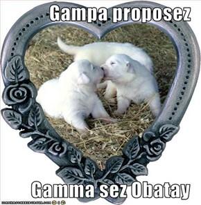 Gampa proposez  Gamma sez Obatay