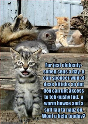 Fur jest elebenty- seben cens a day, u can sponcer wun of dese kittehs so dat dey can get akcess to teh gushy fud,  a warm howse and a soft lap ta napz on.  