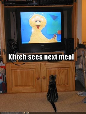 Kitteh sees next meal