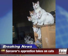 Breaking News - Sorcerer's apprentice takes on cats