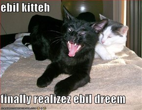 ebil kitteh  finally realizez ebil dreem