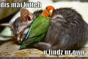 dis mai kitteh  u findz ur own