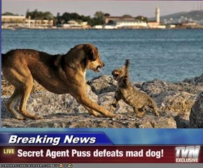 Breaking News - Secret Agent Puss defeats mad dog!