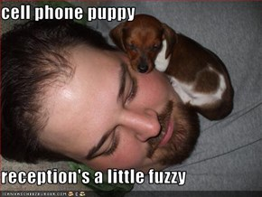 cell phone puppy  reception's a little fuzzy