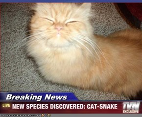 Breaking News - NEW SPECIES DISCOVERED: CAT-SNAKE