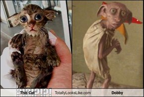 This Cat Totally Looks Like Dobby