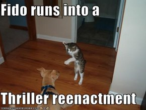 Fido runs into a  Thriller reenactment