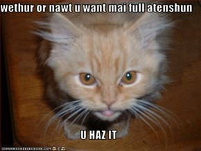 wethur or nawt u want mai full atenshun  U HAZ IT