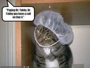 """Paging Dr. Tabby, Dr. Tabby you have a call on line 4."""