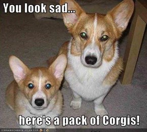 You look sad...  here's a pack of Corgis!
