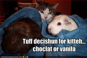 Tuff decishun for kitteh...