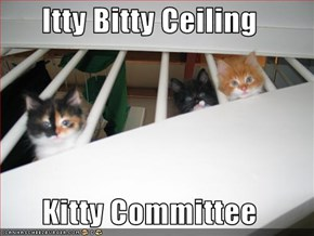 Itty Bitty Ceiling  Kitty Committee