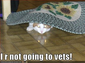 I r not going to vets!