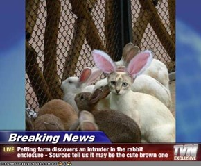 Breaking News - Petting farm discovers an intruder in the rabbit enclosure - Sources tell us it may be the cute brown one