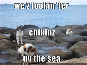 we'z lookin' fer  chikinz  uv the sea