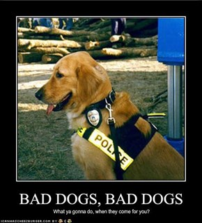 BAD DOGS, BAD DOGS
