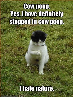 Cow poop. 