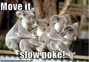 Move it  slow poke!