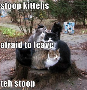 stoop kittehs afraid to leave teh stoop