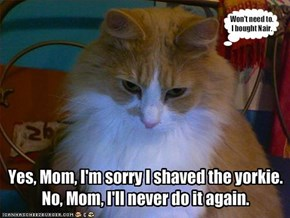 Yes, Mom, I'm sorry I shaved the yorkie.No, Mom, I'll never do it again.