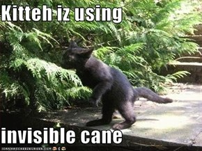 Kitteh iz using  invisible cane