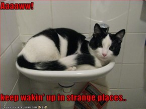 Aaaaww!  keep wakin' up in strange places..