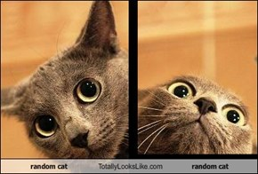 random cat Totally Looks Like random cat