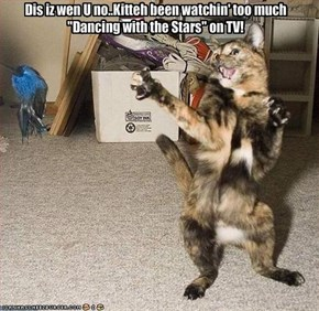 "Dis iz wen U no..Kitteh been watchin' too much ""Dancing with the Stars"" on TV!"