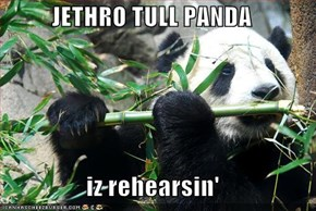 JETHRO TULL PANDA  iz rehearsin'