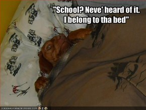 """School? Neve' heard of it. I belong to tha bed"""