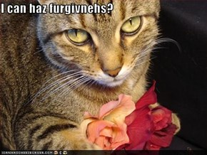 I can haz furgivnehs?