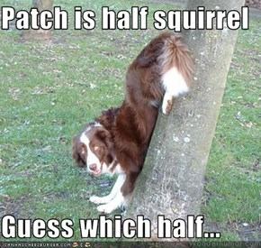 Patch is half squirrel  Guess which half...