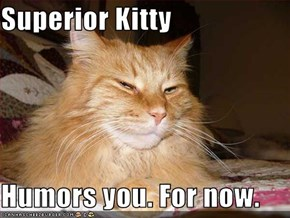 Superior Kitty  Humors you. For now.