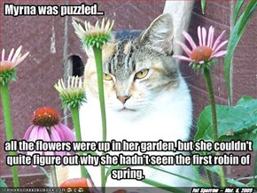 It might have something to do with Kitteh.