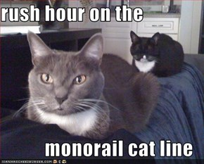 rush hour on the  monorail cat line