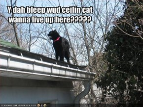 Y dah bleep wud ceilin cat wanna live up here?????