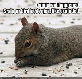 Dunno wut happened. Srsly. ur birdfeeder jus, like exploded.