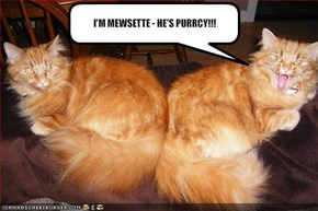 I'M MEWSETTE - HE'S PURRCY!!!