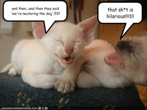 and then...and then they said 'we're neutering the dog'.!!!1!!