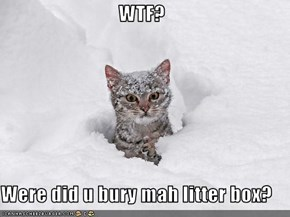 WTF?  Were did u bury mah litter box?